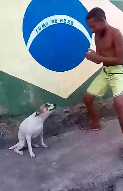 上手に腰をくねらせてダンスをする犬