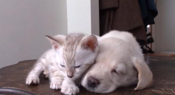 子犬と子猫の仲良しコンビがスリスリし合っている動画