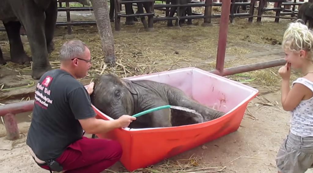 まるで酔っ払い!プールにうまく入れず、よろけまくる子ゾウが可愛い!