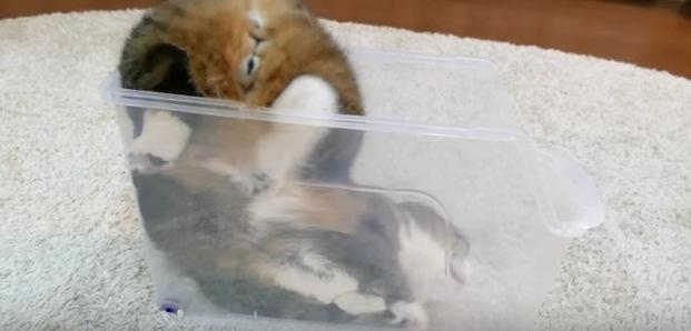 細長なファイルケース内でくつろぐ猫