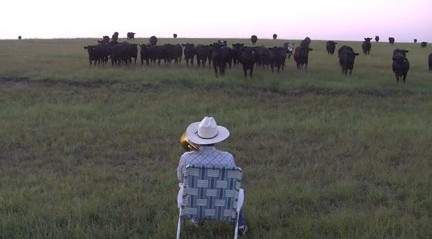 大草原でトロンボーンを演奏すると。。。牛が大集合!