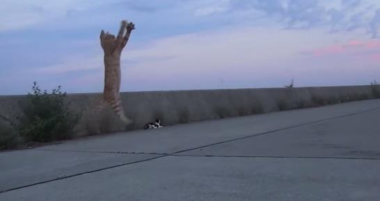 猫がトンボを捕まえた決定的瞬間の動画!
