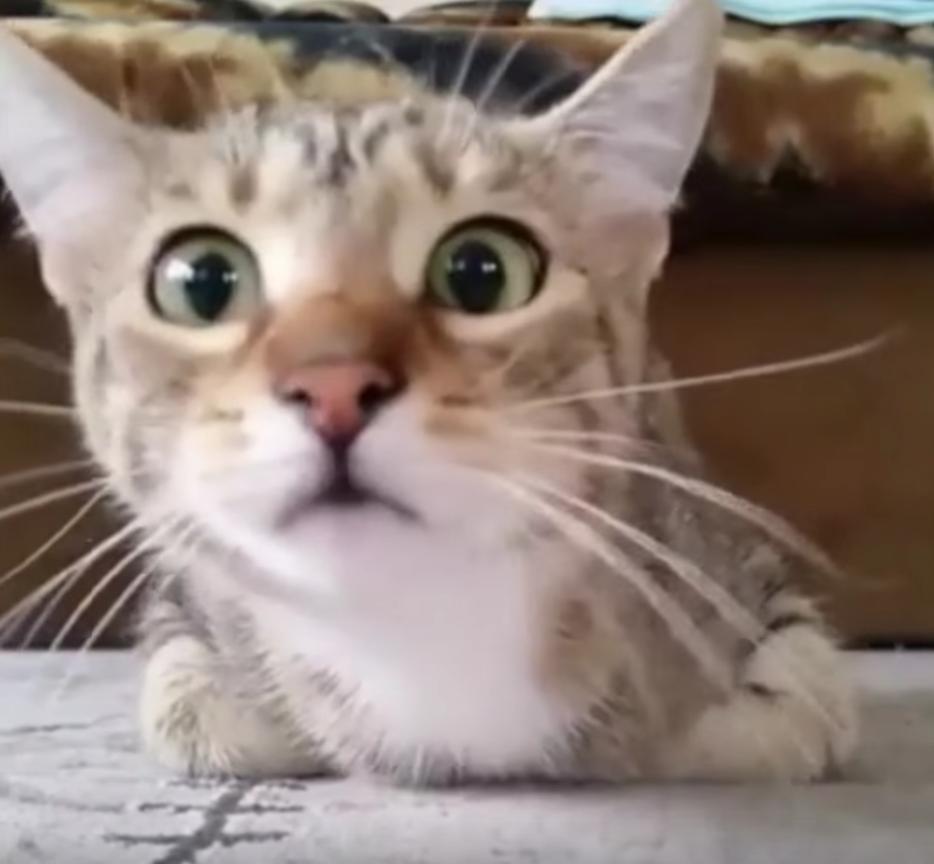 猫にホラー映画を見せた時のリアクションに笑ってしまう動画