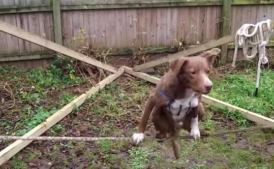 神ワザ発見!!この犬の特技がすごい!