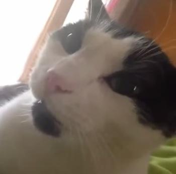 カワイらしい猫が「I LOVE YOU」って言う動画
