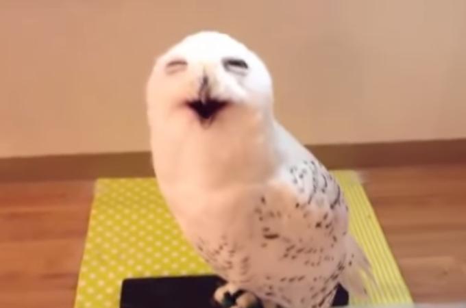 笑顔が素敵なフクロウに胸キュン!