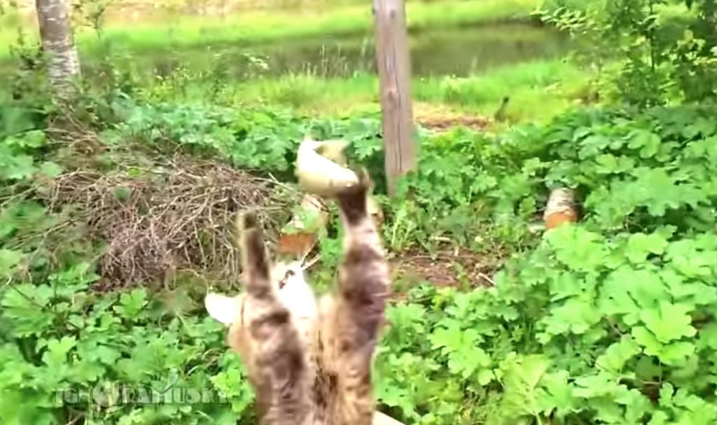 魚釣りの兄さんを狙う猫
