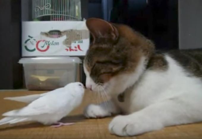 猫大好き!インコと猫がラブラブな動画
