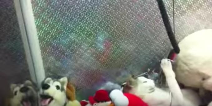 UFOキャッチャーの景品に埋もれた猫が可愛すぎる!