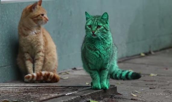 目が覚めるような緑色の猫