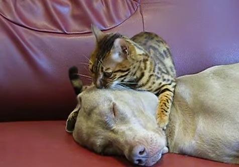 猫の「にぎにぎ」マッサージにメロメロな犬