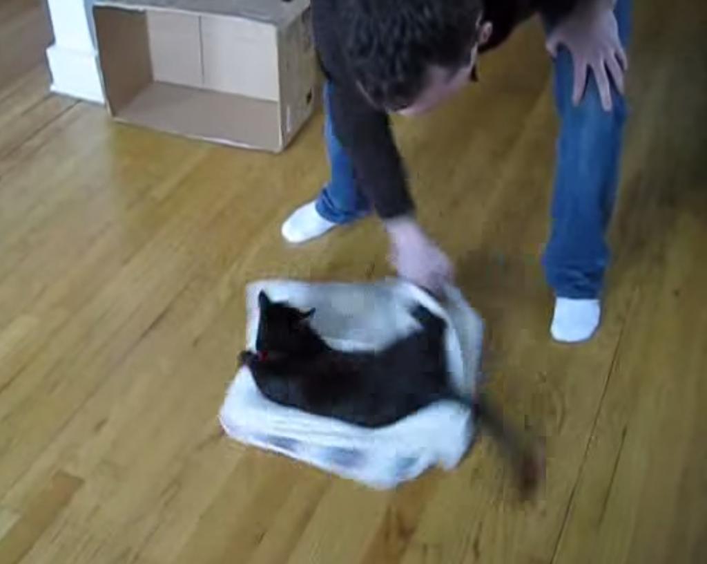 猫が目を回すとこうなります
