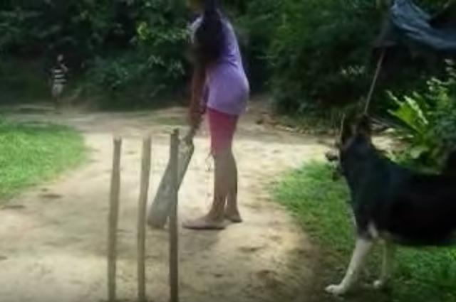 クリケットの申し子ならぬ申し犬現る