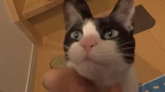 3日間ぶりにご主人と会う猫の甘えっぷりがカワイイ