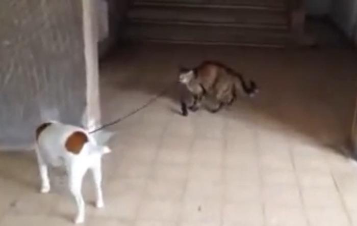 犬を飼っている!?猫がいる