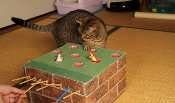猫が喜ぶこと間違いなし!猫用お手製モグラ叩き