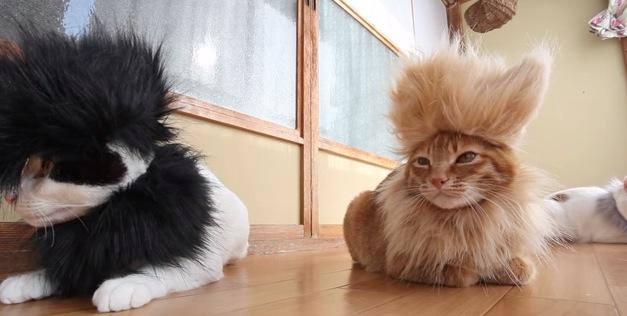 モヒカンな猫が暖かそう