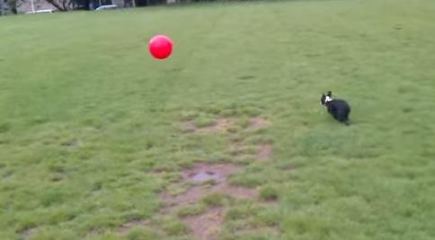 見事にぶっ飛ぶ犬の動画
