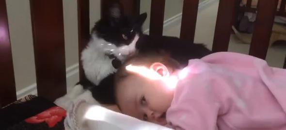 我が子のように人間の赤ちゃんの毛づくろいをする猫
