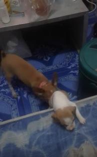 赤ちゃん犬を助ける子犬の友情にホッコリする動画