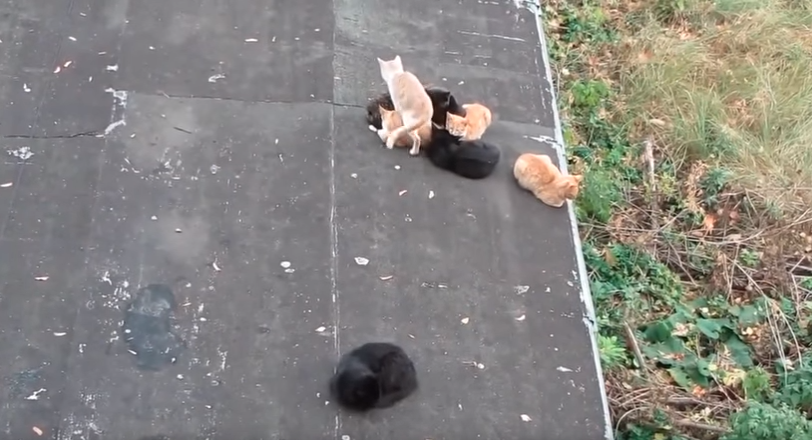 仲間を座布団代わりにして暖をとる猫現る。