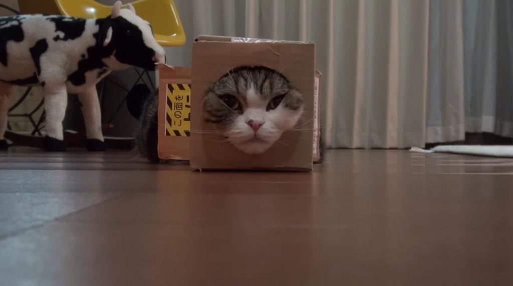四角い猫の動画