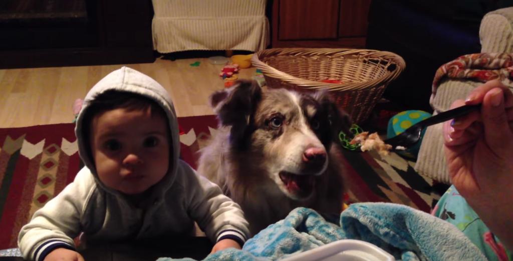 """赤ちゃんに""""ママ""""と言って欲しかったはずが、隣のワンちゃんに一足先を越されちゃった件"""