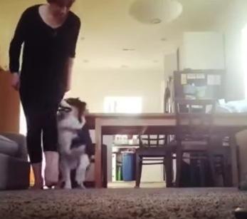 軽やかなステップでアイリッシュダンスをする犬