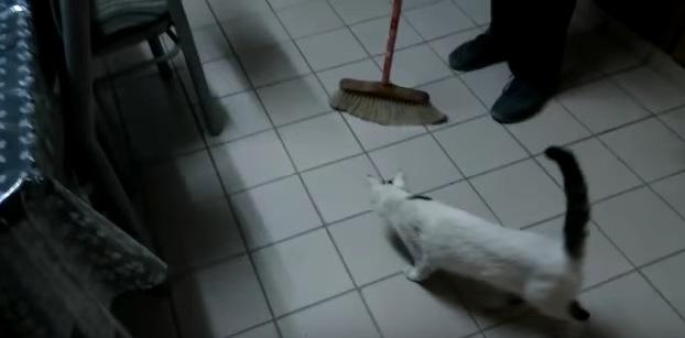 モップ代わりに大活躍?!な猫