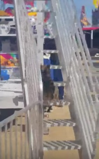 大きな滑り台をルンルンで滑る小さなワンちゃんが可愛い!