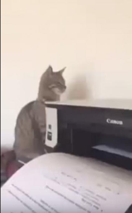 プリンターの動作音にどーしても反応してしまう猫