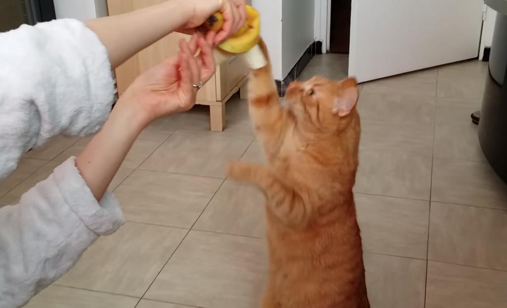 バナナが好きな猫