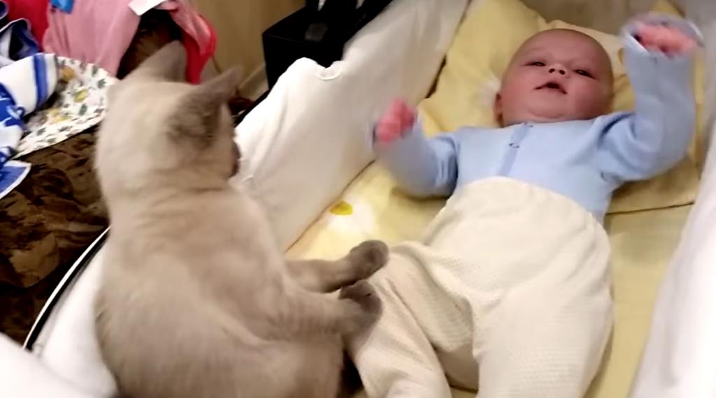 元気よく動く赤ちゃんの動きを止めようとする猫