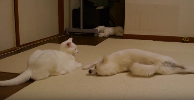 犬を投げ倒す柔道家な猫