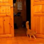 マリオのジャンプする効果音に合わせて、飛びます!飛びます!な猫