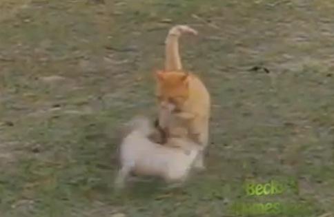 何が起こっても動じない猫。
