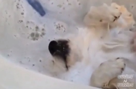 おもしろ!犬のお風呂タイム動画集