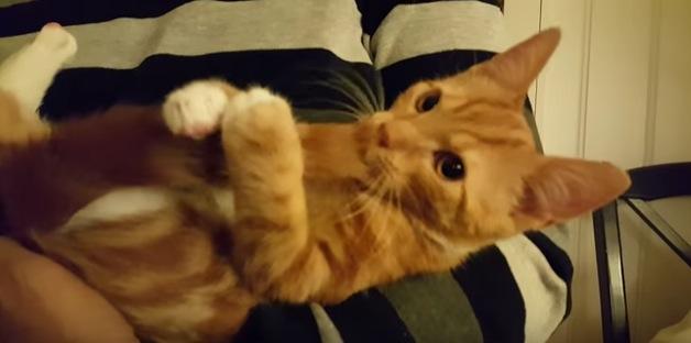 """シッポを""""おしゃぶり""""代わりにする子猫"""