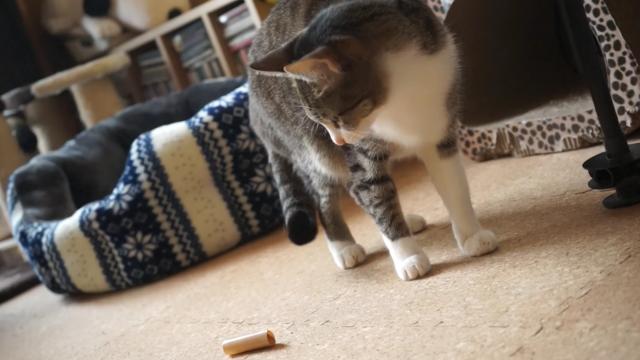ガムテープと戦う猫 勝つのはどっち?!