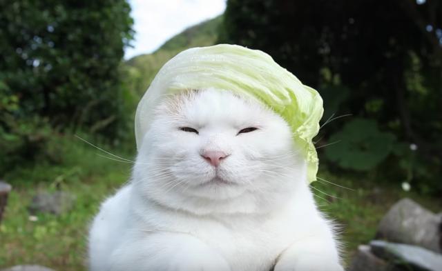 レタスを被った猫