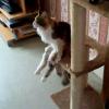 キャットタワーに腰掛けたたずむ美猫ちゃんの座り方に注目!