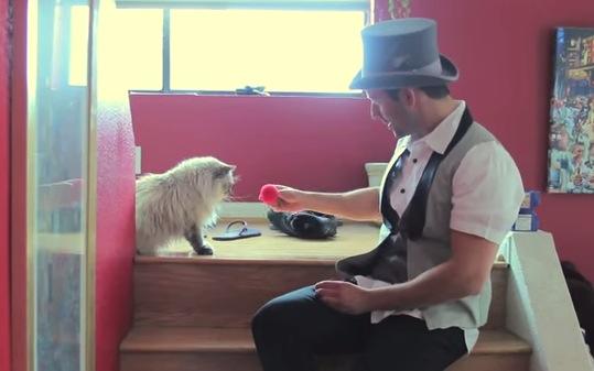 悲しいくらいマジックに反応しない猫達