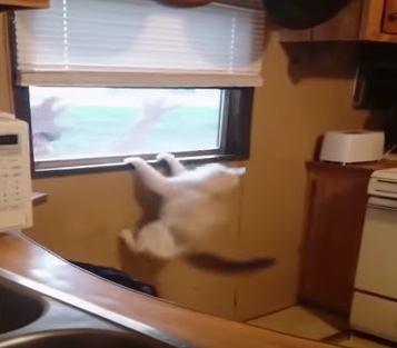 恐怖と怒りが爆発した猫