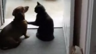 肉球の威力おそるべし。前足で犬をピタッと静止させる猫