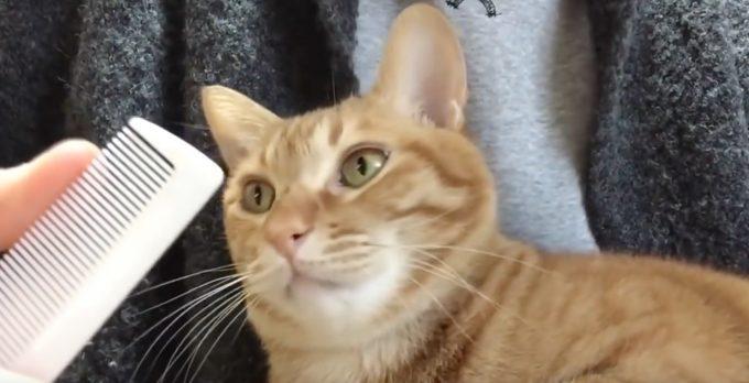 不思議な連鎖反応!クシを鳴らすと口を開けちゃう猫