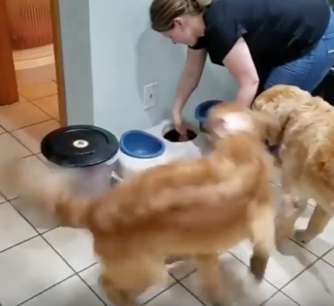 ご飯が嬉しすぎて高速回転する犬