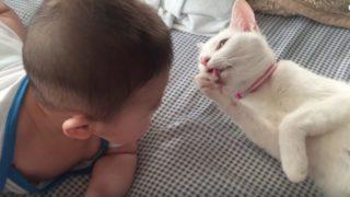 ただそれだけで癒される〜白猫と赤ちゃんがベッドでゴロゴロしている動画