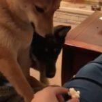 ポップコーンを横取りされた犬の表情がクセになる動画