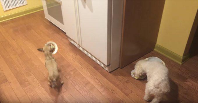 どーしてもお友達と一緒にご飯が食べたい犬