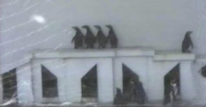 息ぴったり!4匹のペンギンダンス